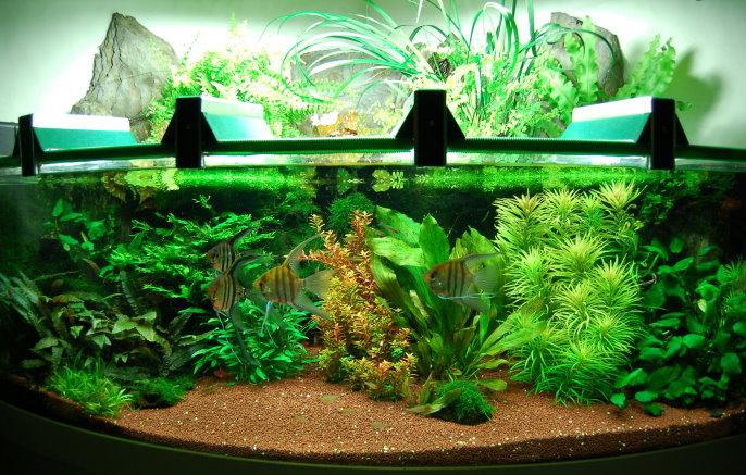 walther aquarium. Black Bedroom Furniture Sets. Home Design Ideas